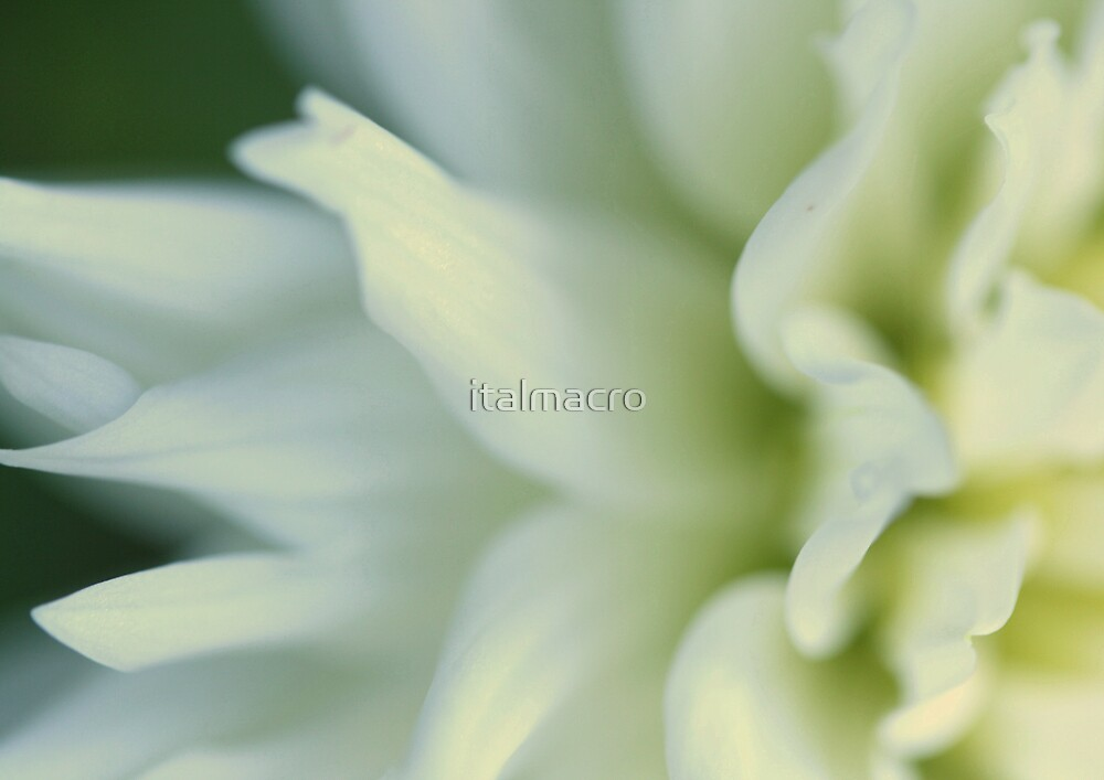 fresh by italmacro