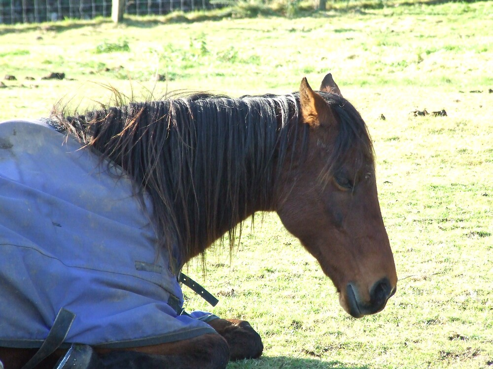 horse resting by matjenkins