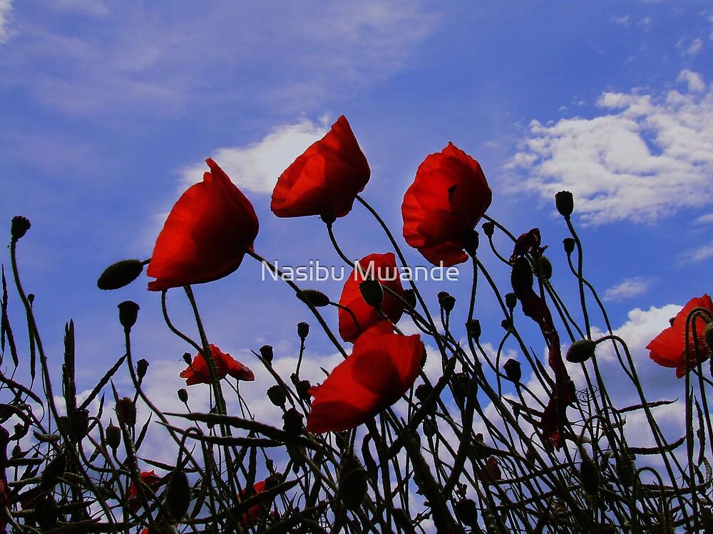 Poppies by Nasibu Mwande