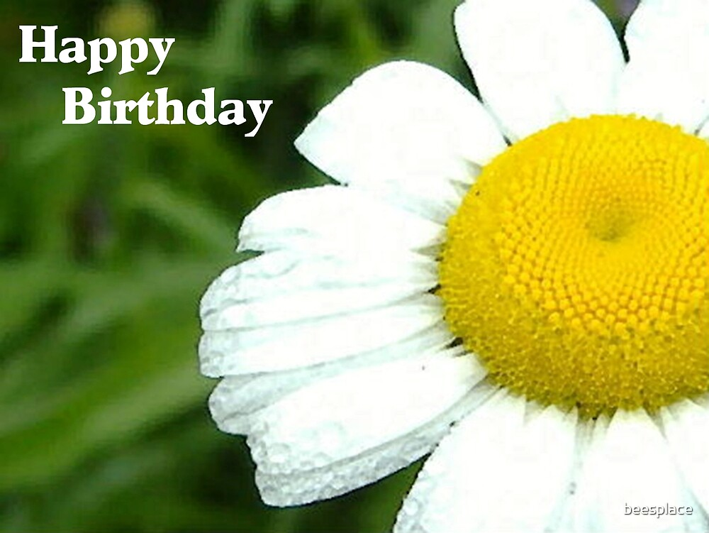 Birthday Daisy by beesplace