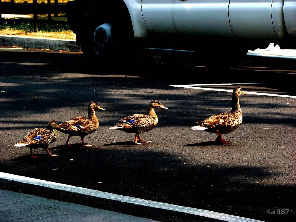 Duck Xing. by Karl187