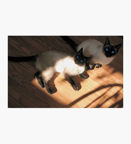 The Siamese Dudes Photographic Print