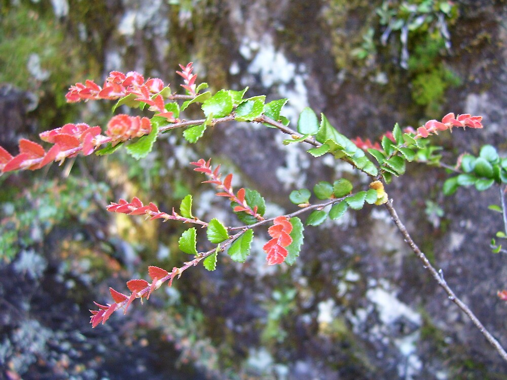 sweet new growth on the branches by gaylene