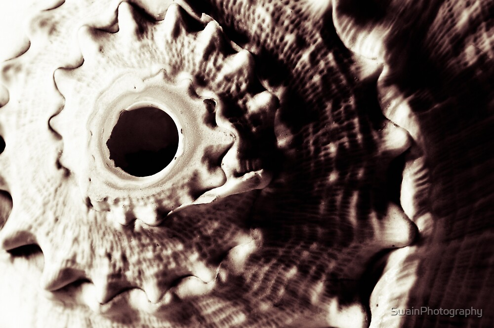 Conch by SwainPhotography