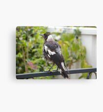 Bird in the Backyard Canvas Print