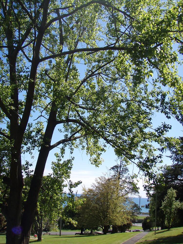 Burnie Park, Tasmania by gaylene
