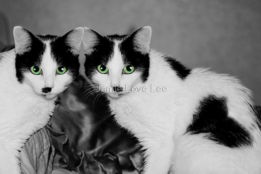 Double vision by Jamie Lee