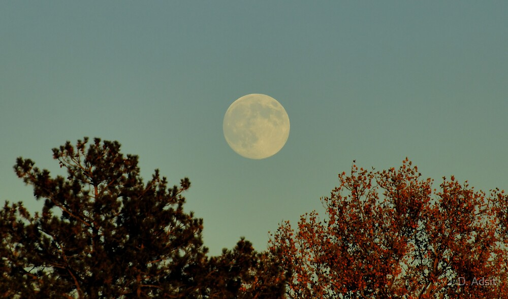 Today's Moonrise by J. D. Adsit