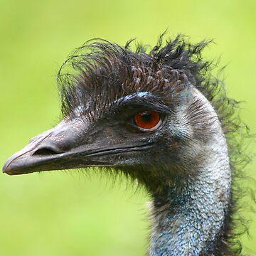 Emu by arkle