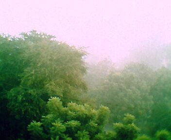 The fog by Anaida  Lawson