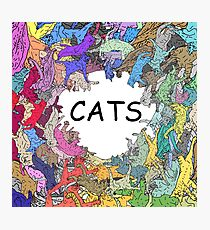 Colorful Rainbow Cats Photographic Print