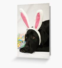 Easter Holly Greeting Card