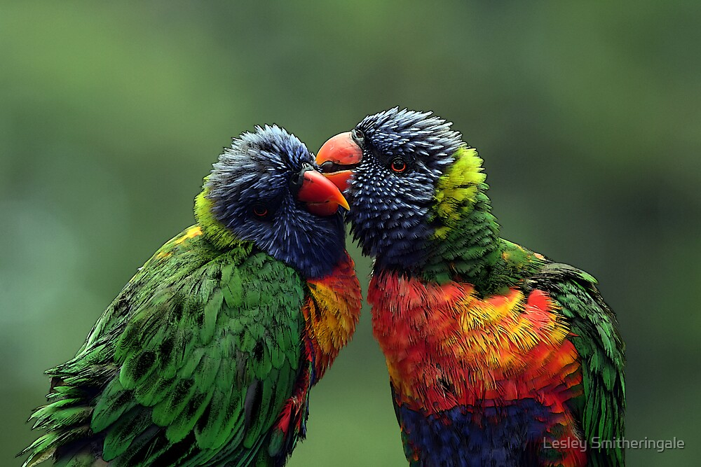 Cheek to Cheek by Lesley Smitheringale
