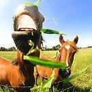 HORSE'N ROUND... by JAZ art