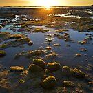 Wynyard Beach Sunrise - Tasmania by Anthony Davey