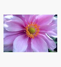 Pretty Pastels! Photographic Print