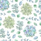 Cool succulent plants green and blue leaves watercolour pattern by Sandra O'Connor
