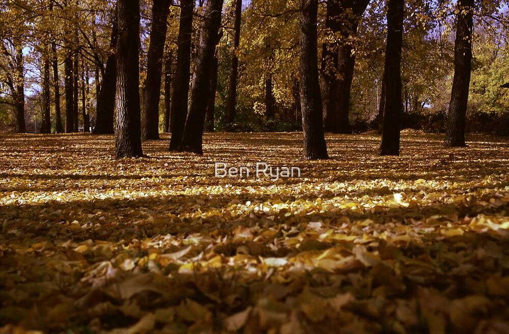 Walk in the woods by Ben Ryan