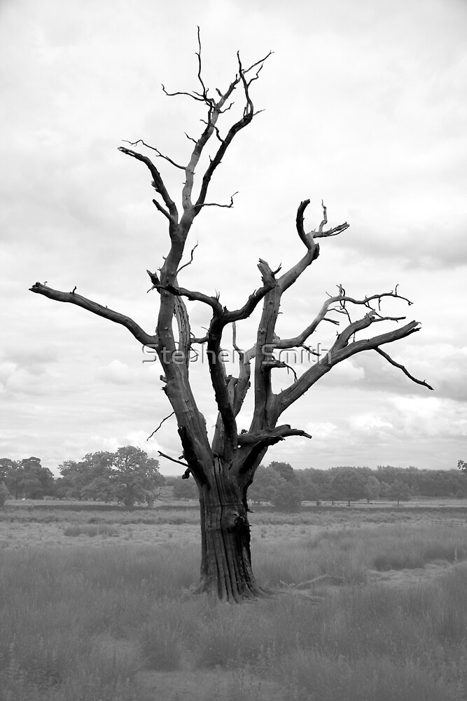Dead Wood by Stephen  Smith