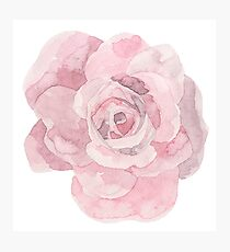 Pretty pink rose flower watercolour Photographic Print