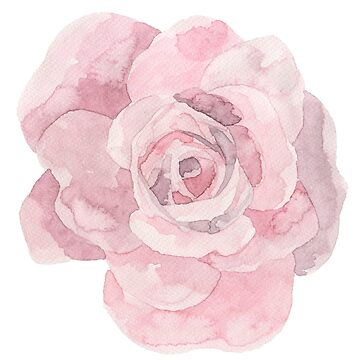 Pretty pink rose flower watercolour by Mindreader