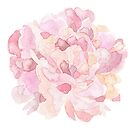 Pretty pink and peach carnation flower watercolour by Sandra O'Connor