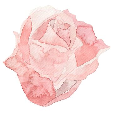 Pretty red rose flower watercolour by Mindreader