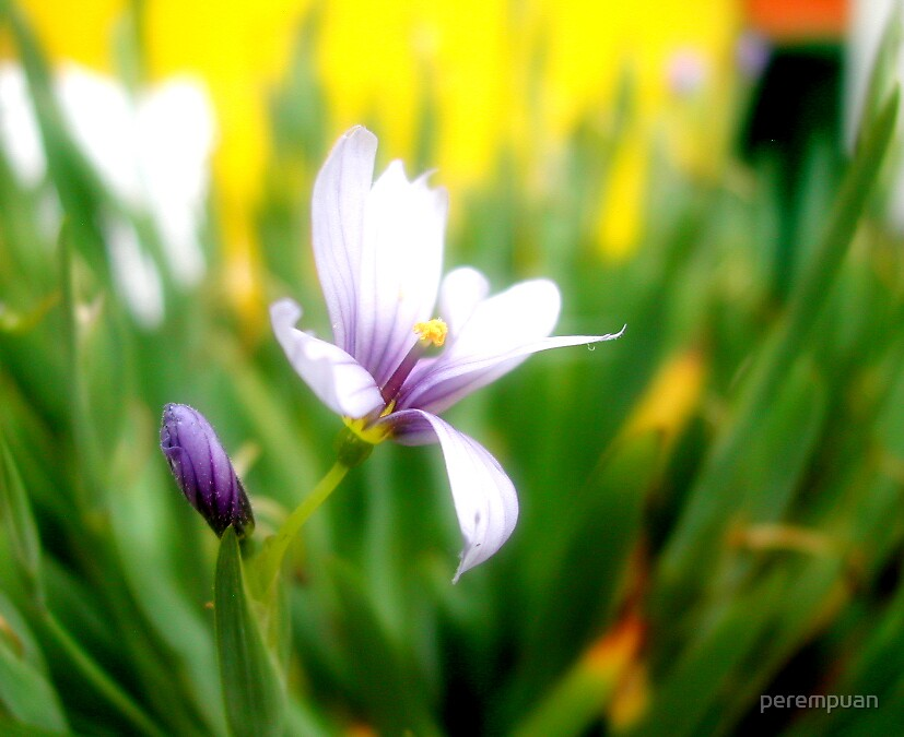 From the garden [1] by perempuan