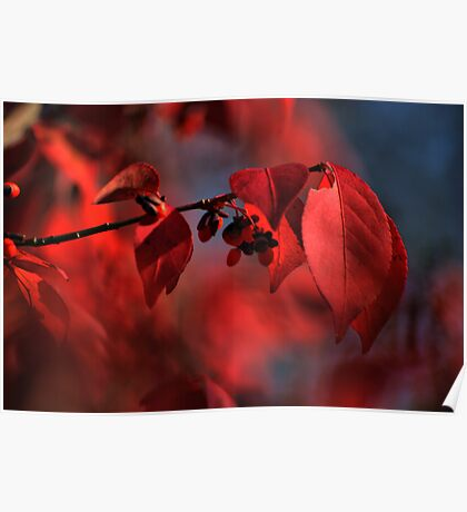 red leaves consumed in bokeh Poster