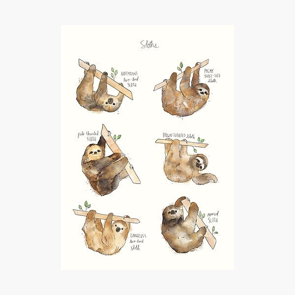 Sloths Photographic Print