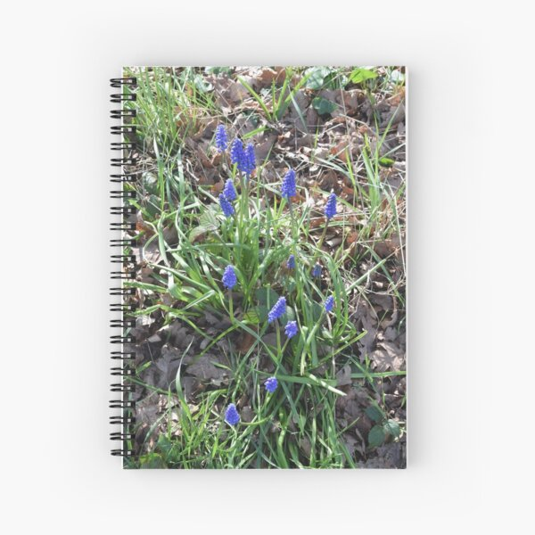 Blue Muscari Flowers in the Spring Woods Spiral Notebook