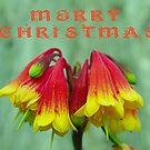 Australian Christmas Bells by Liz Worth