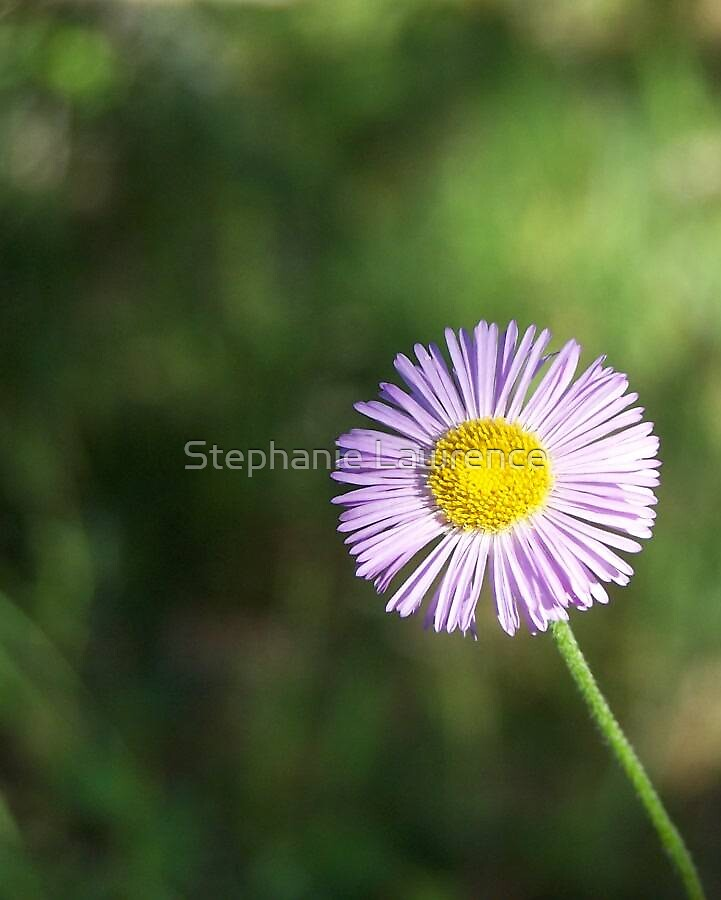 Random Flower by Stephanie Lawrence
