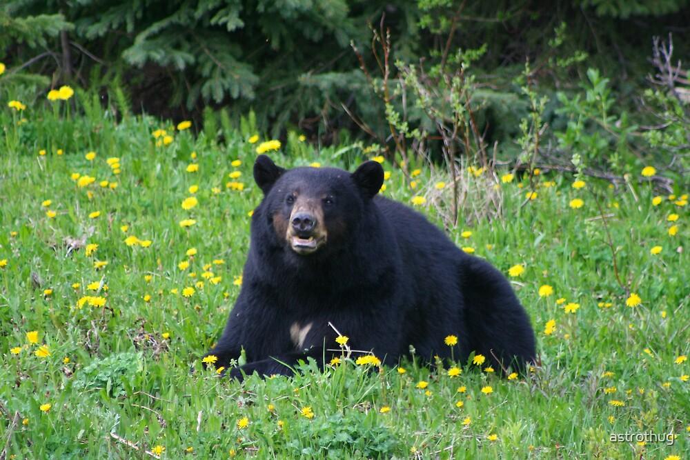 black bear by astrothug