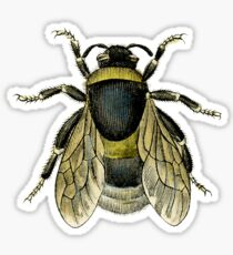 antique typographic vintage honey bee Sticker