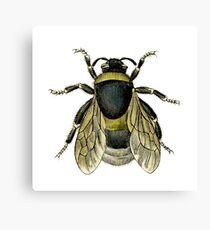 antique typographic vintage honey bee Canvas Print