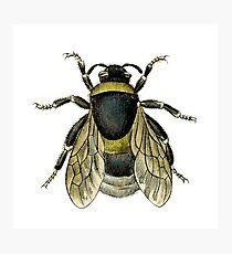 antique typographic vintage honey bee Photographic Print