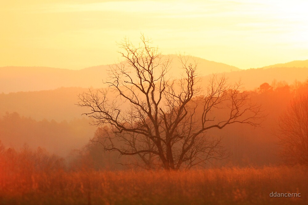 Sunset in Cades Cove by ddancernc