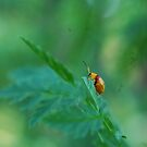Bug on a bush.. by ozjules8
