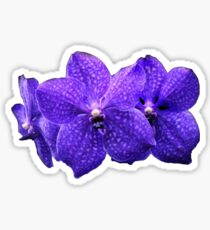 Purple Orchids Sticker