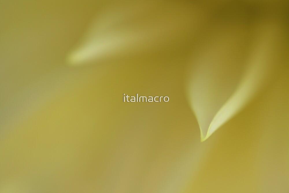 guidance by italmacro