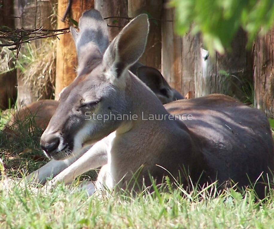 Afternoon Snooze by Stephanie Lawrence