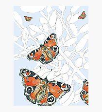 Peacock Butterflies Photographic Print