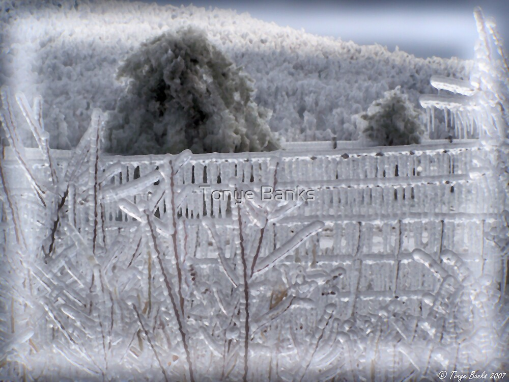 Icy Wonderland by Tonye Banks