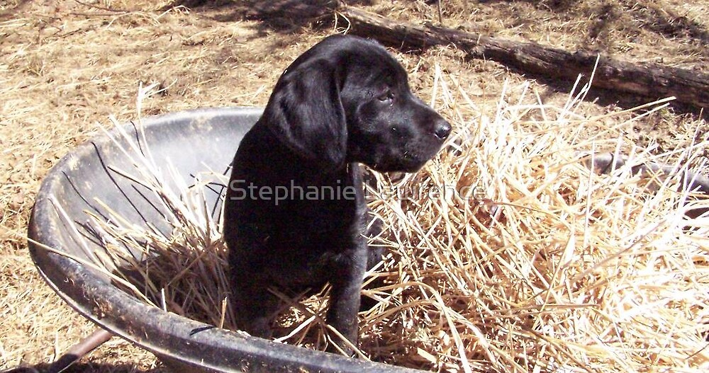 Hayseed Pup by Stephanie Lawrence