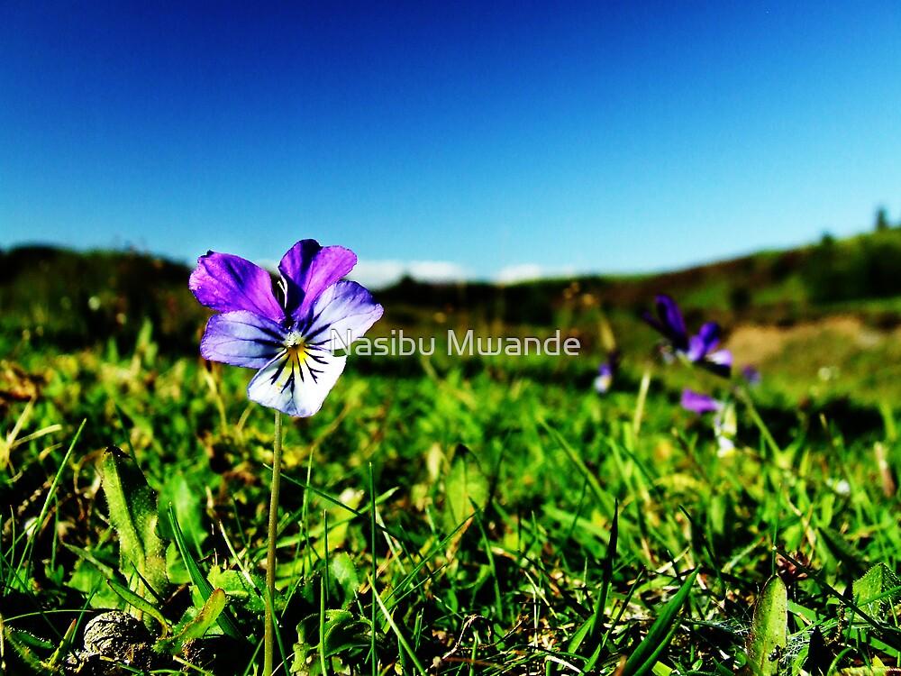 A beautiful day by Nasibu Mwande