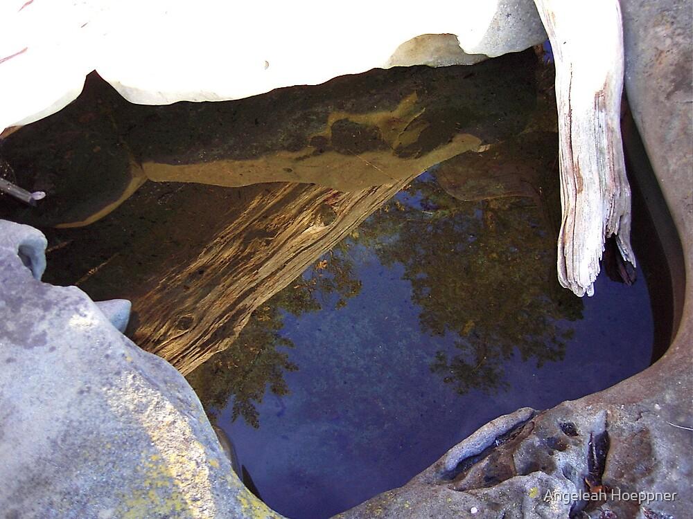 Reflecting Pool by Angeleah Hoeppner
