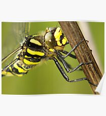 Yellow Dragonfly Poster