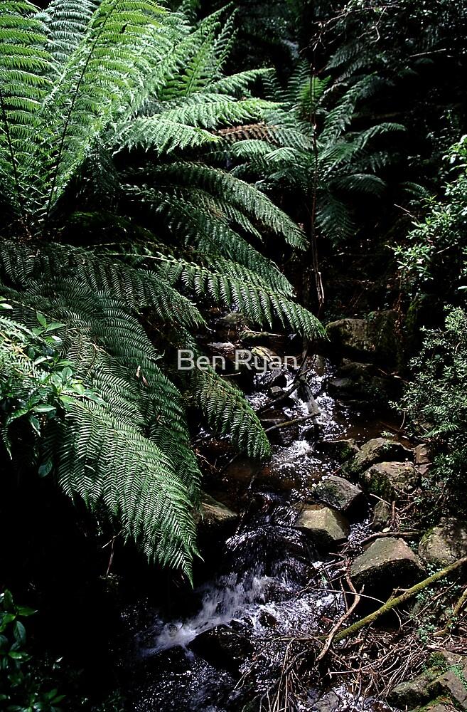 Babbling Brook by Ben Ryan