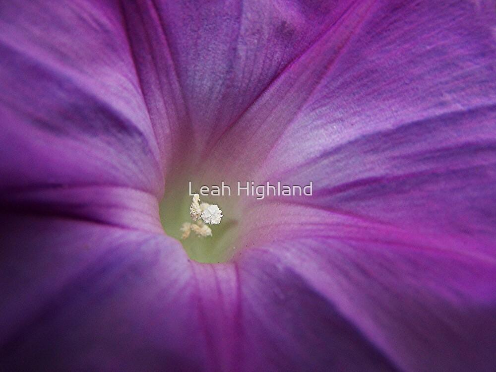 Glory, Glory by Leah Highland